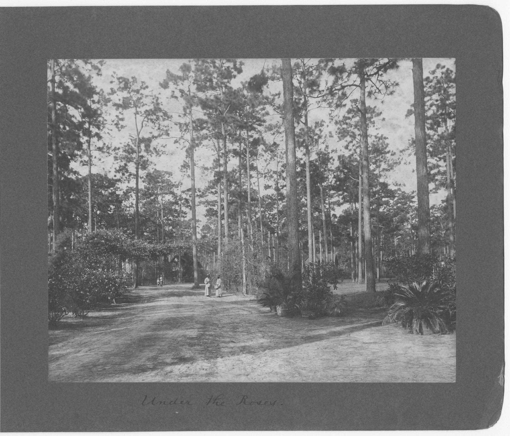 Pinehurst Tea Plantation Photograph Album, page 2
