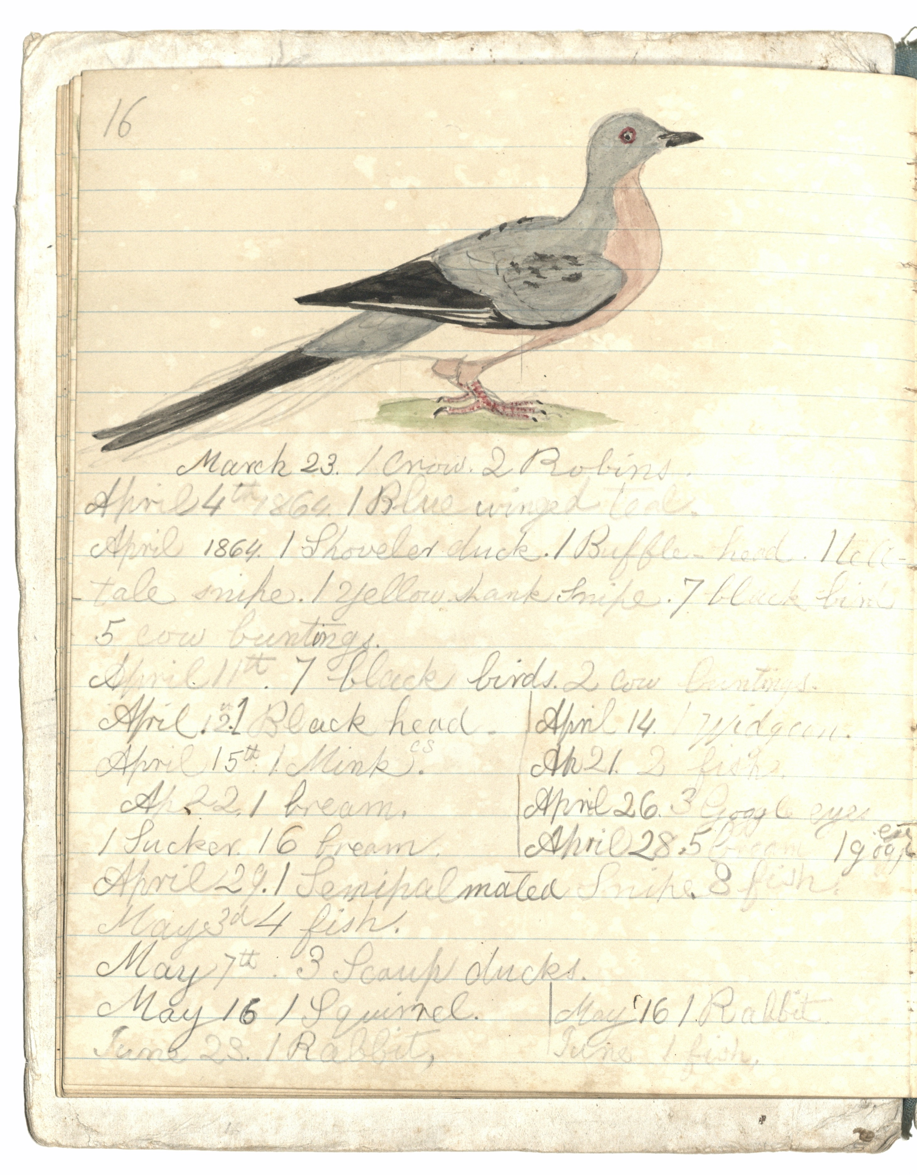 Langdon Cheves III Hunting Notes & Art, Page 17