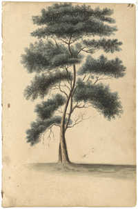 Landscape painting, two-trunked tree