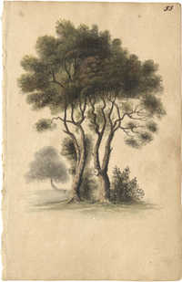Two trees with foliage