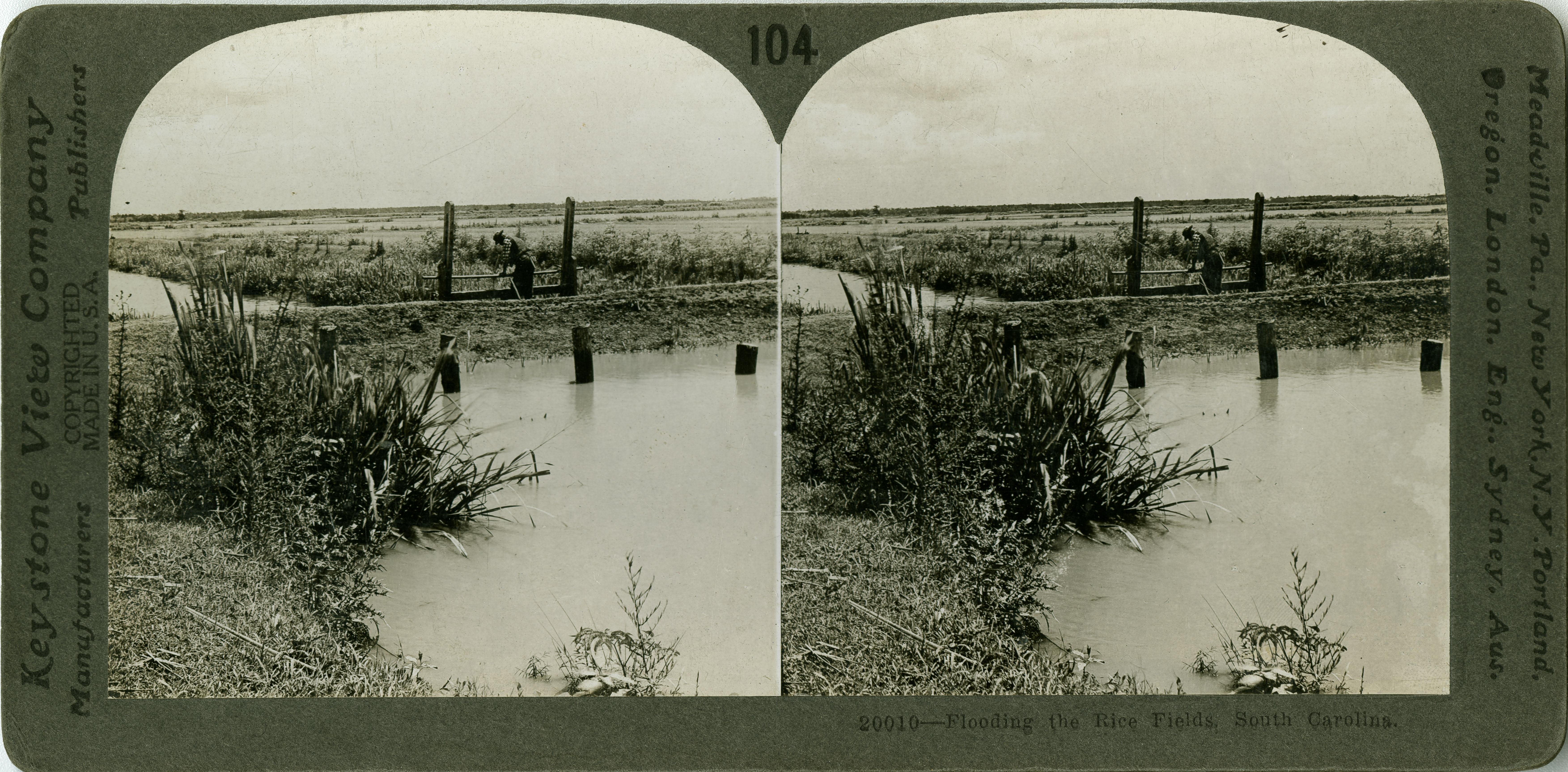 Flooding the rice fields, South Carolina