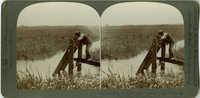 Opening the flood-gates -- flooding a rice field at High Tide, South Carolina, U.S.A.