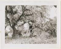 Cabin Through Trees 1