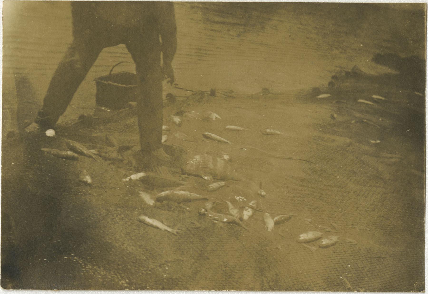 Beached Fish