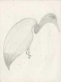 Sketch of egret
