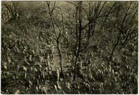 Praha, Starý židovský hřbitov / Старое еврейское кладбище / Alter Judenfriedhof / Old Jewish Cemetery / Le vieux cimetière juif
