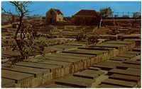 Old Jewish Cemetery. 17th century. Oldest in Western Hemisphere.