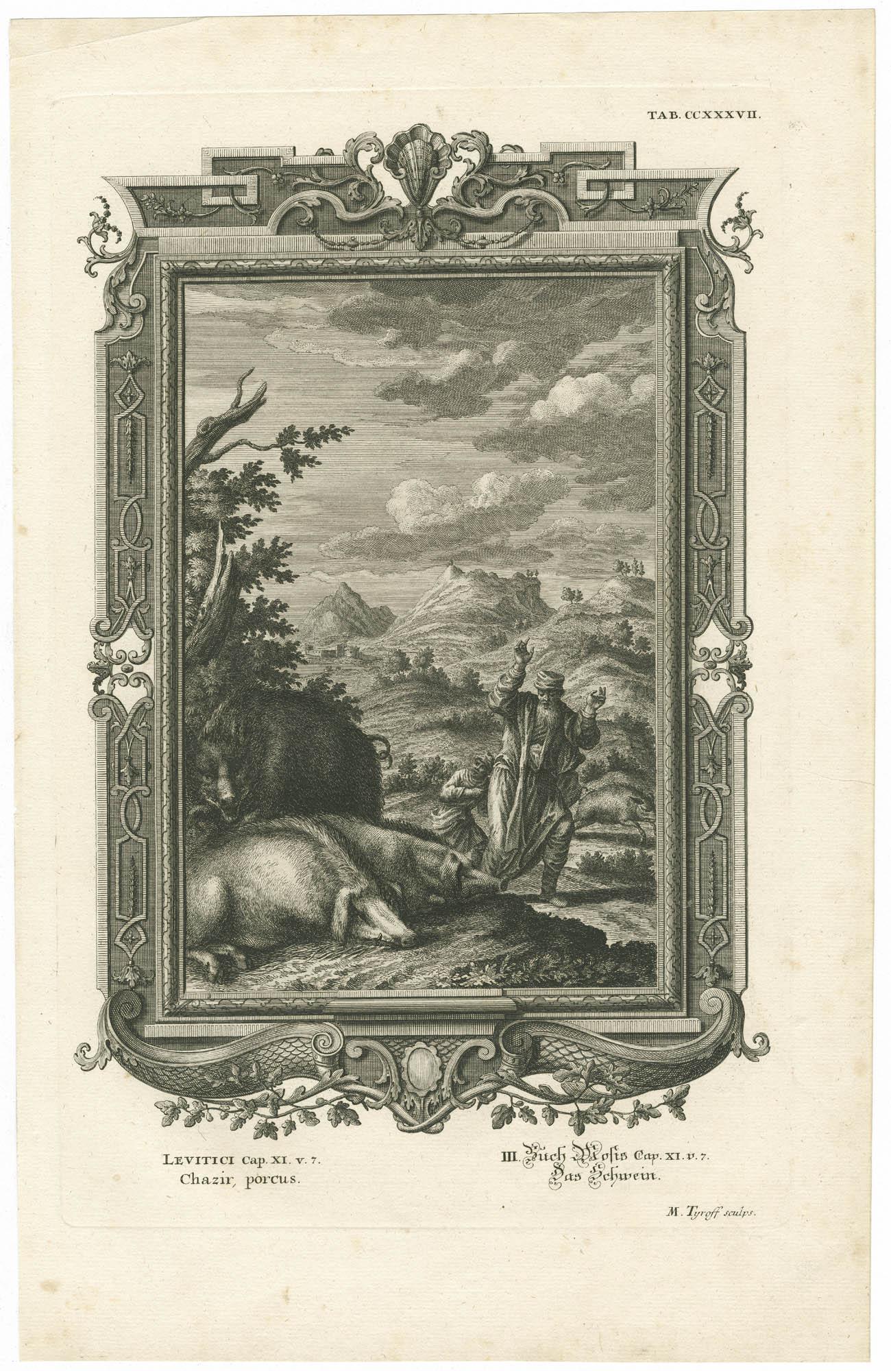 Leviti Cap. XI. v. 7 Chazir, porcus / III. Buch Mosis Cap. XI. v. 7 Das Schwein