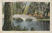 The Bridge, Magnolia Gardens, Charleston, S.C.