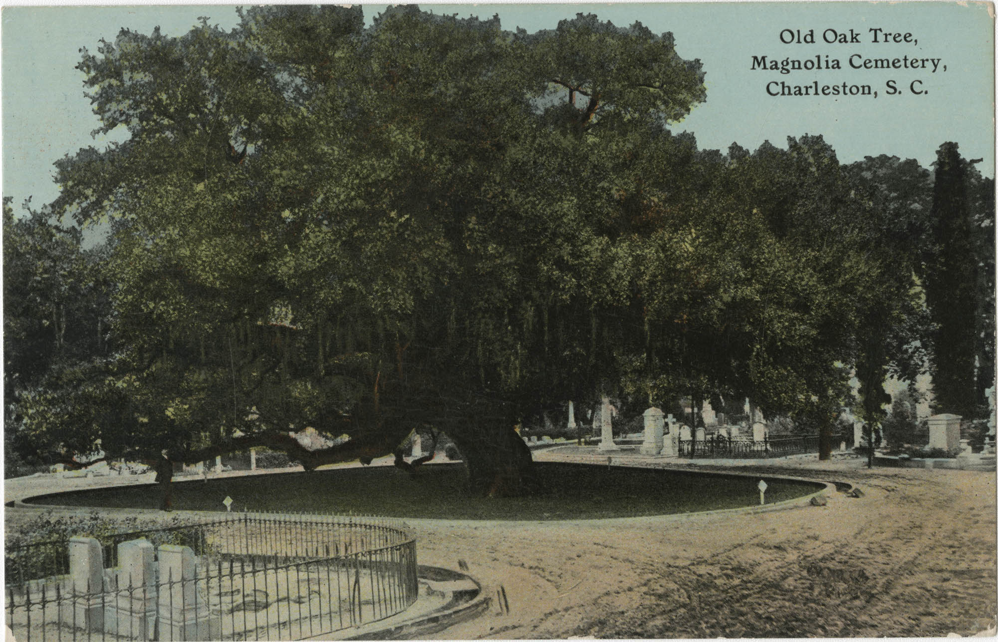 Old Oak Tree, Magnolia Cemetery, Charleston, S.C.