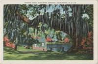 Spanish Moss, Middleton Gardens, Charleston, S.C.