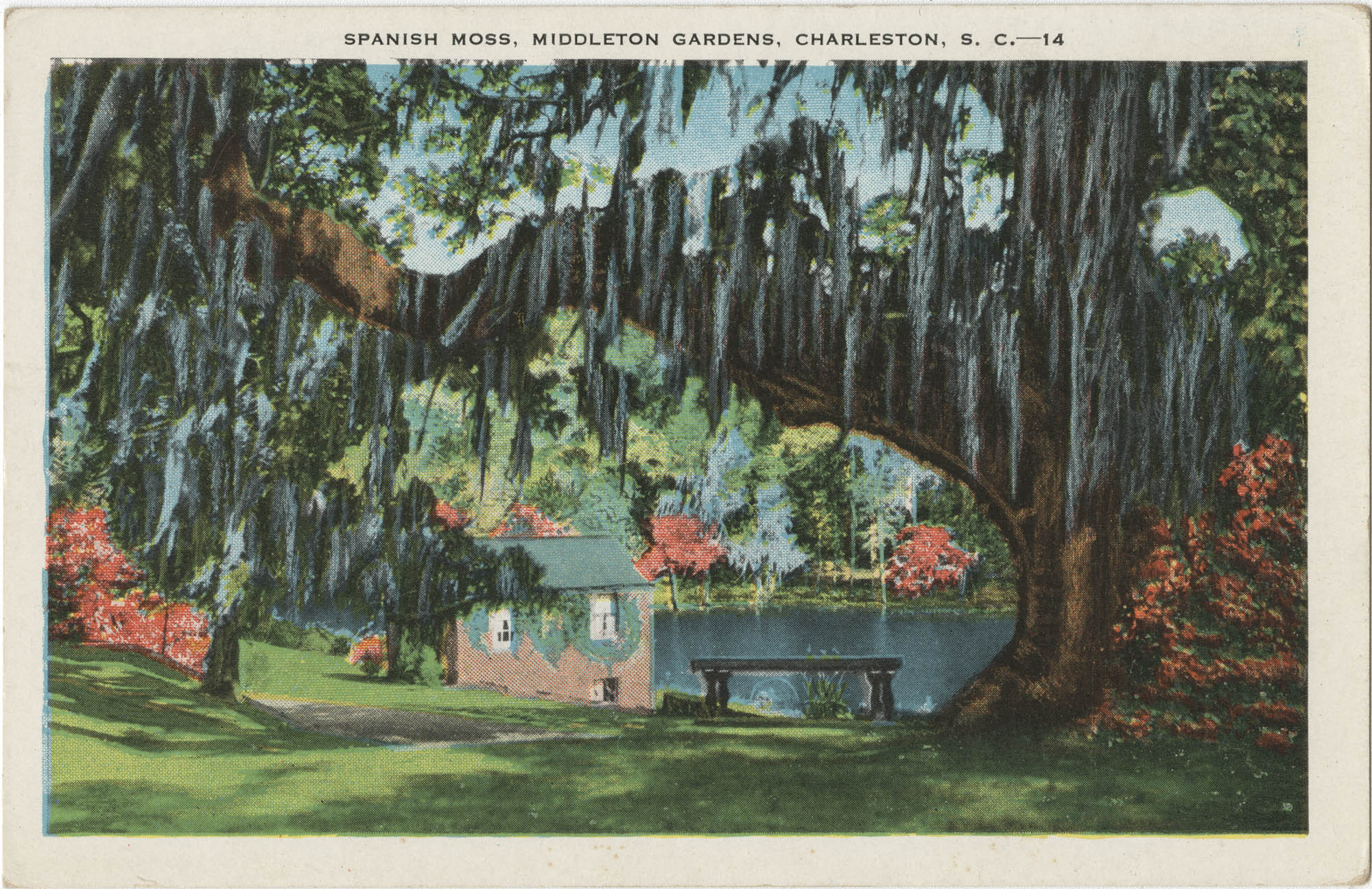 Spanish Moss, Middleton Gardens, Charleston, S.C.
