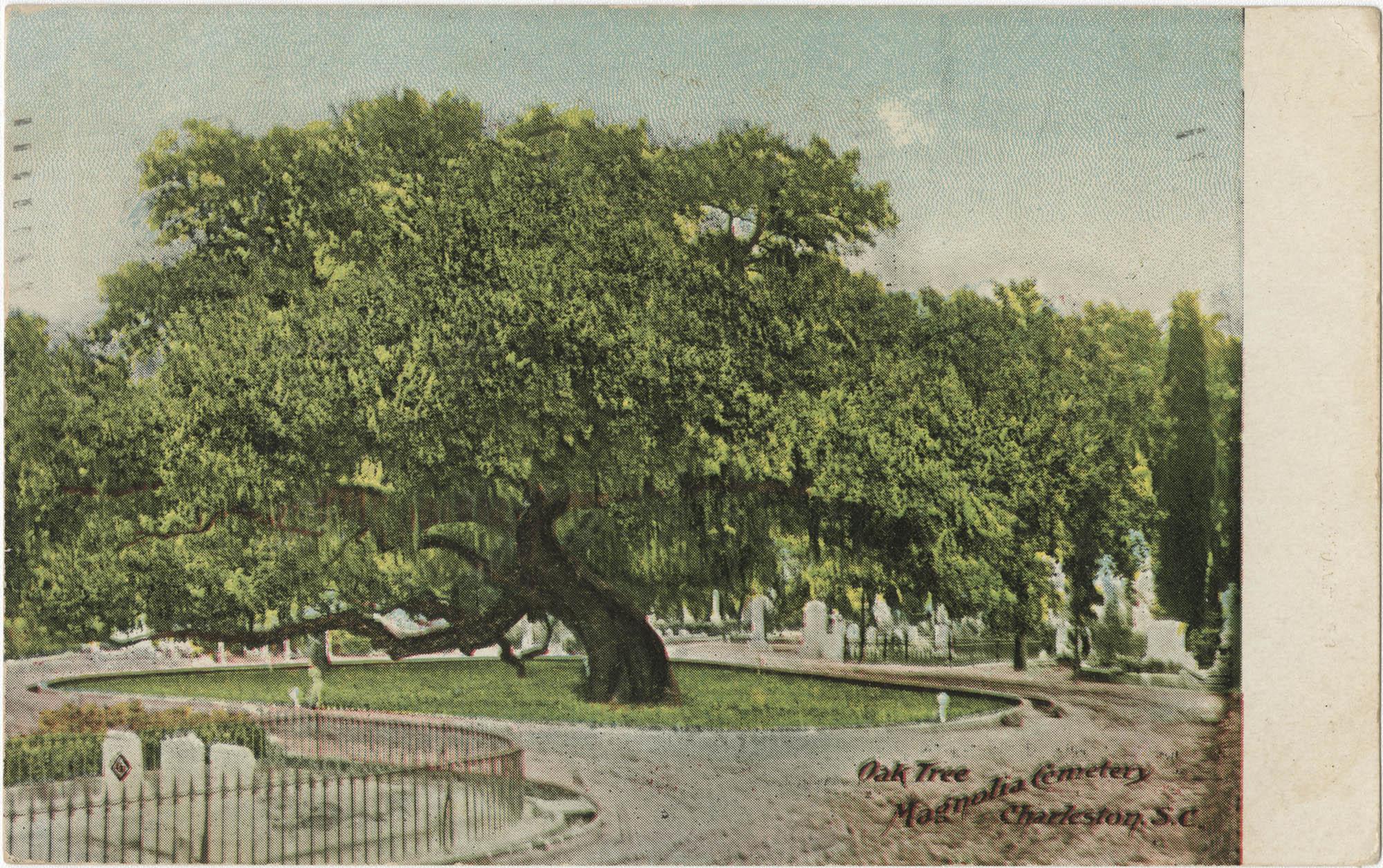 Oak Tree, Magnolia Cemetery, Charleston, S.C.