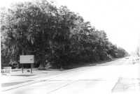 US Route 17 Photo 582