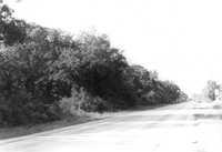 US Route 17 Photo 583