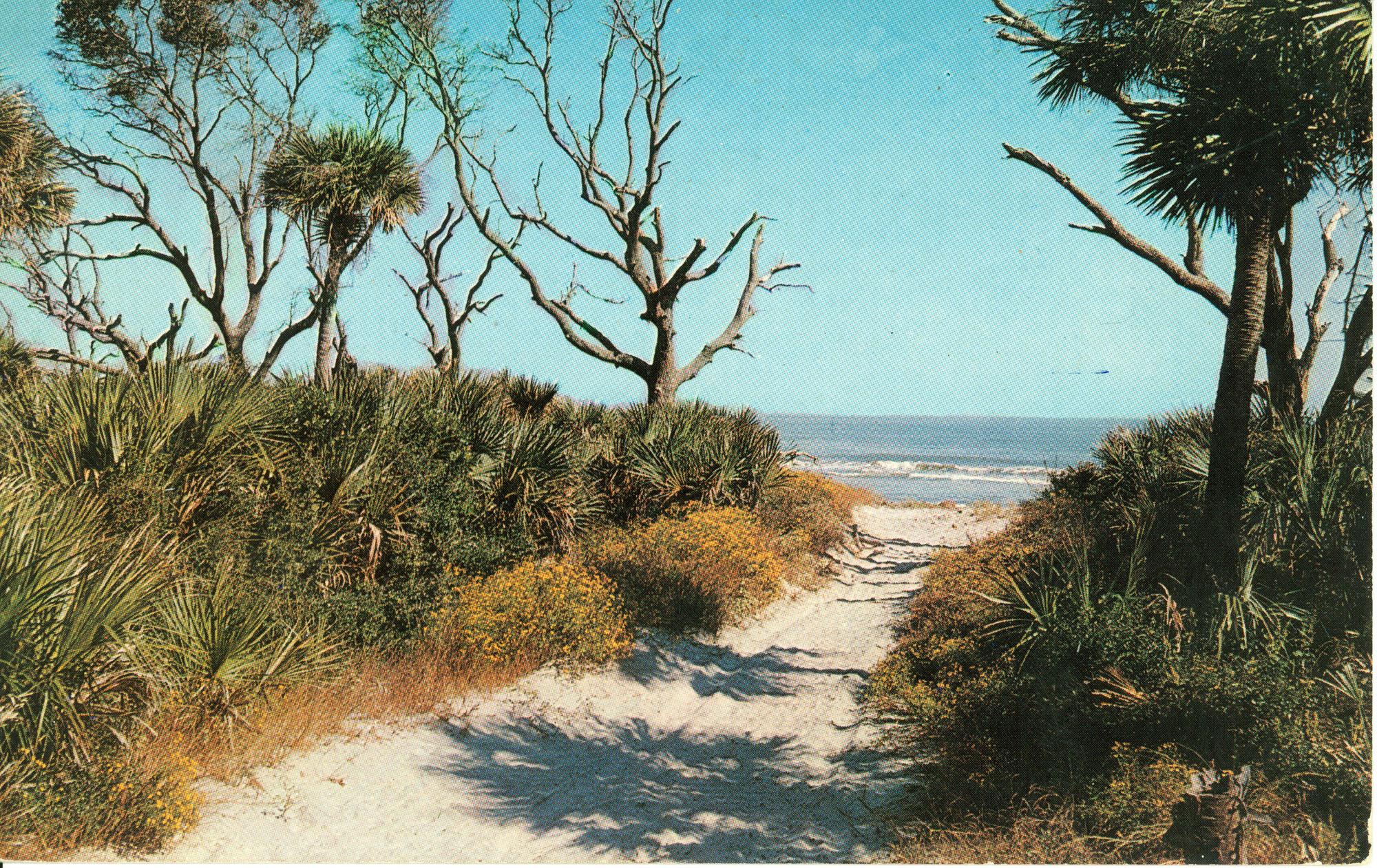 Coastal Scene - Beaufort County, S.C.