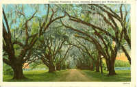 Tomotley Plantation Drive, between Beaufort and Walterboro, S.C.