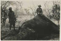 Mario Pansa atop an elephant in Abyssinia, Photograph 2