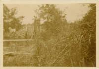 Mulberry Plantation Rice Harvest Photo 11