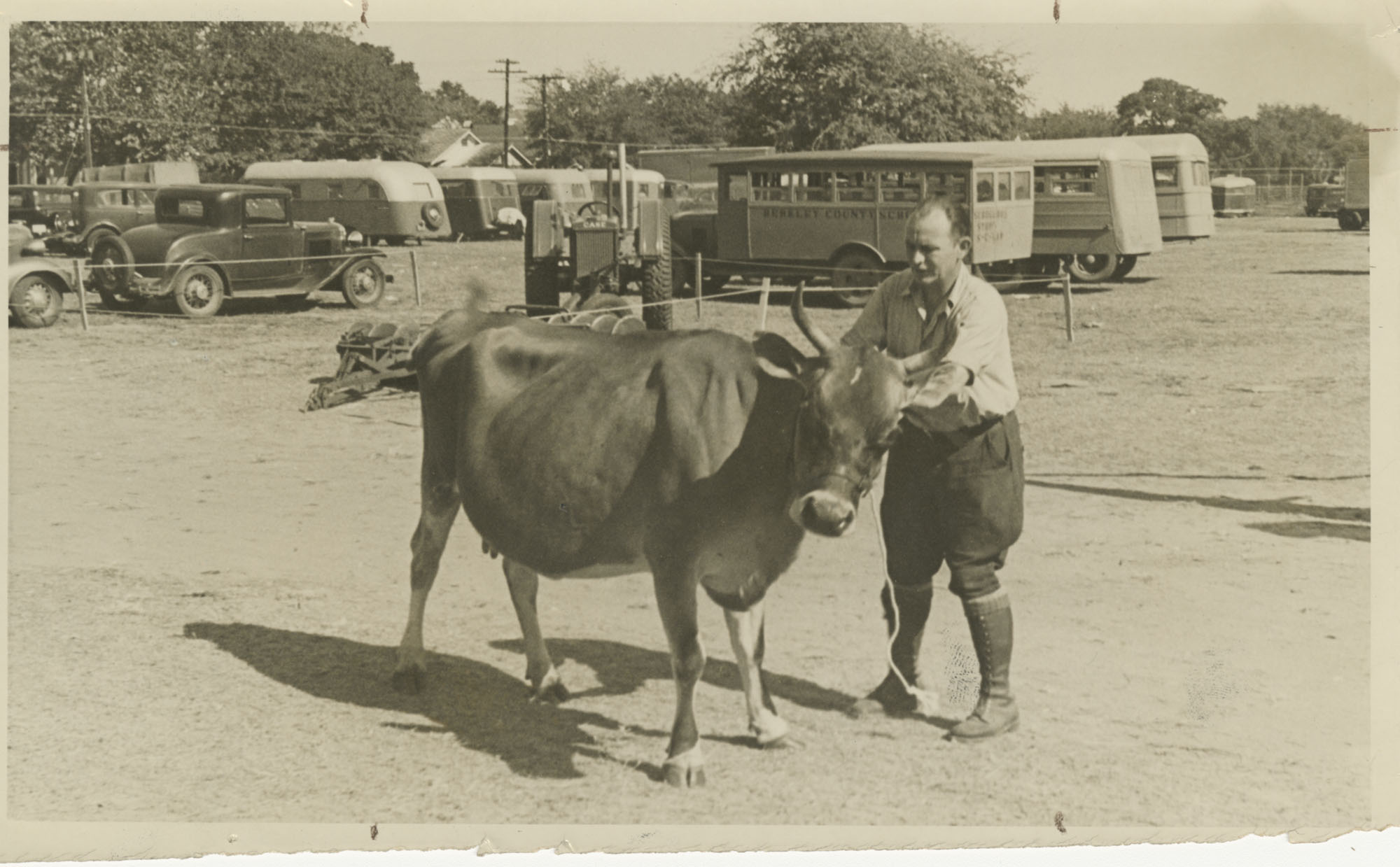 Man with Jersey Cow
