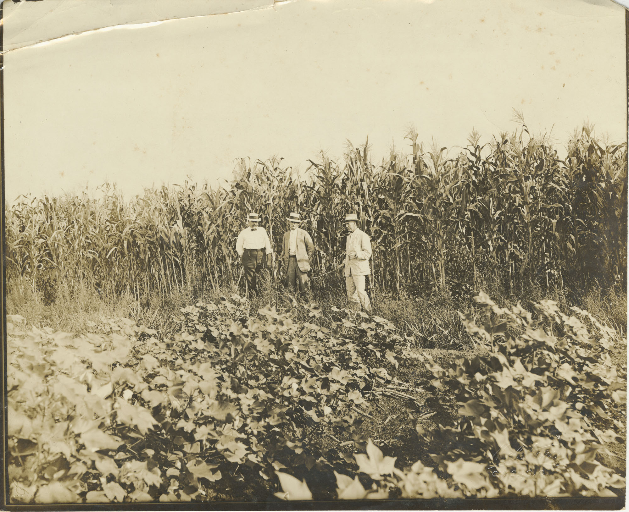 Three Men at T. Farm Fields