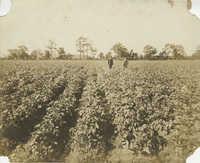 Two Men Walking in a Planted Field