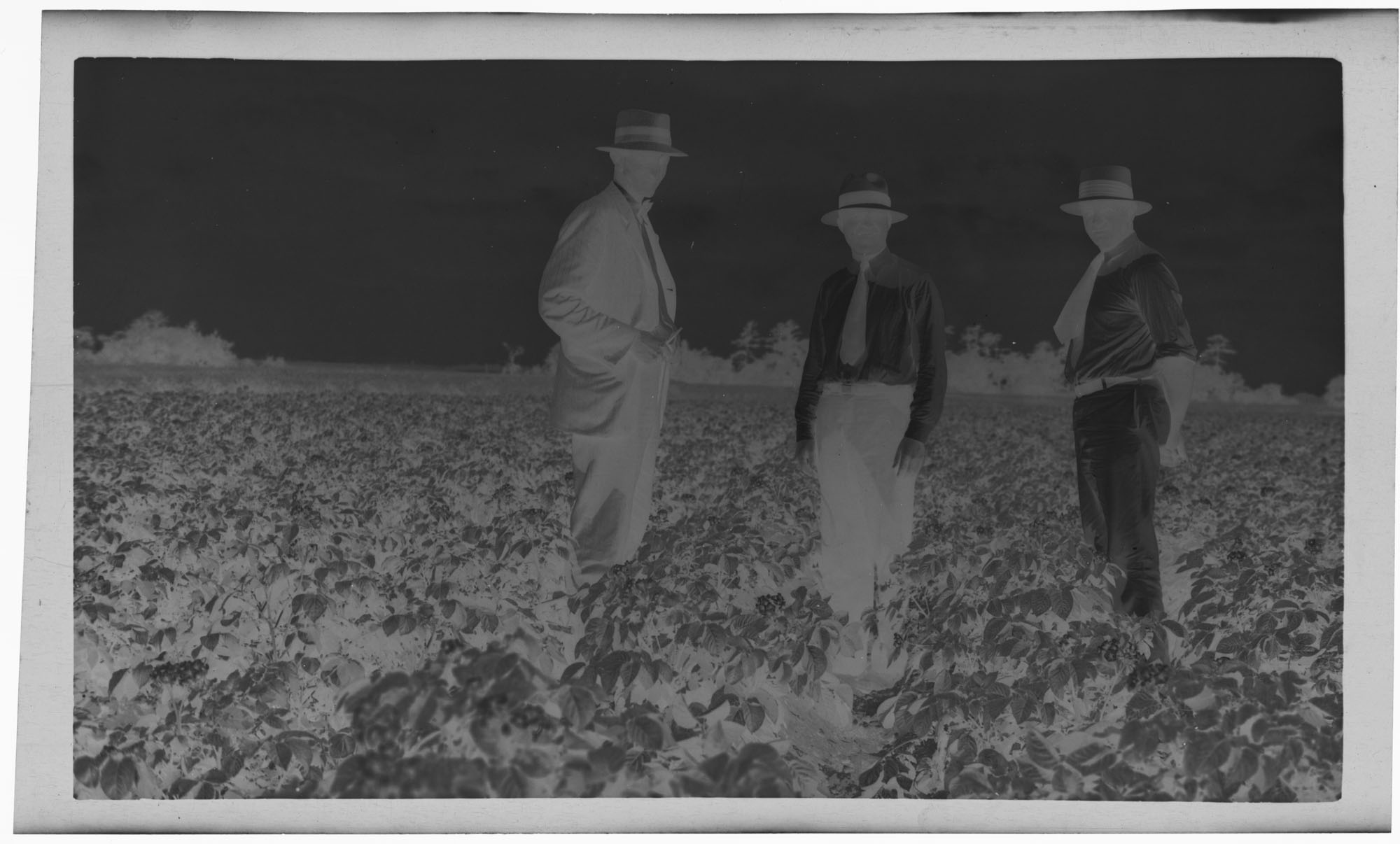 Negative of Three Men and a Field
