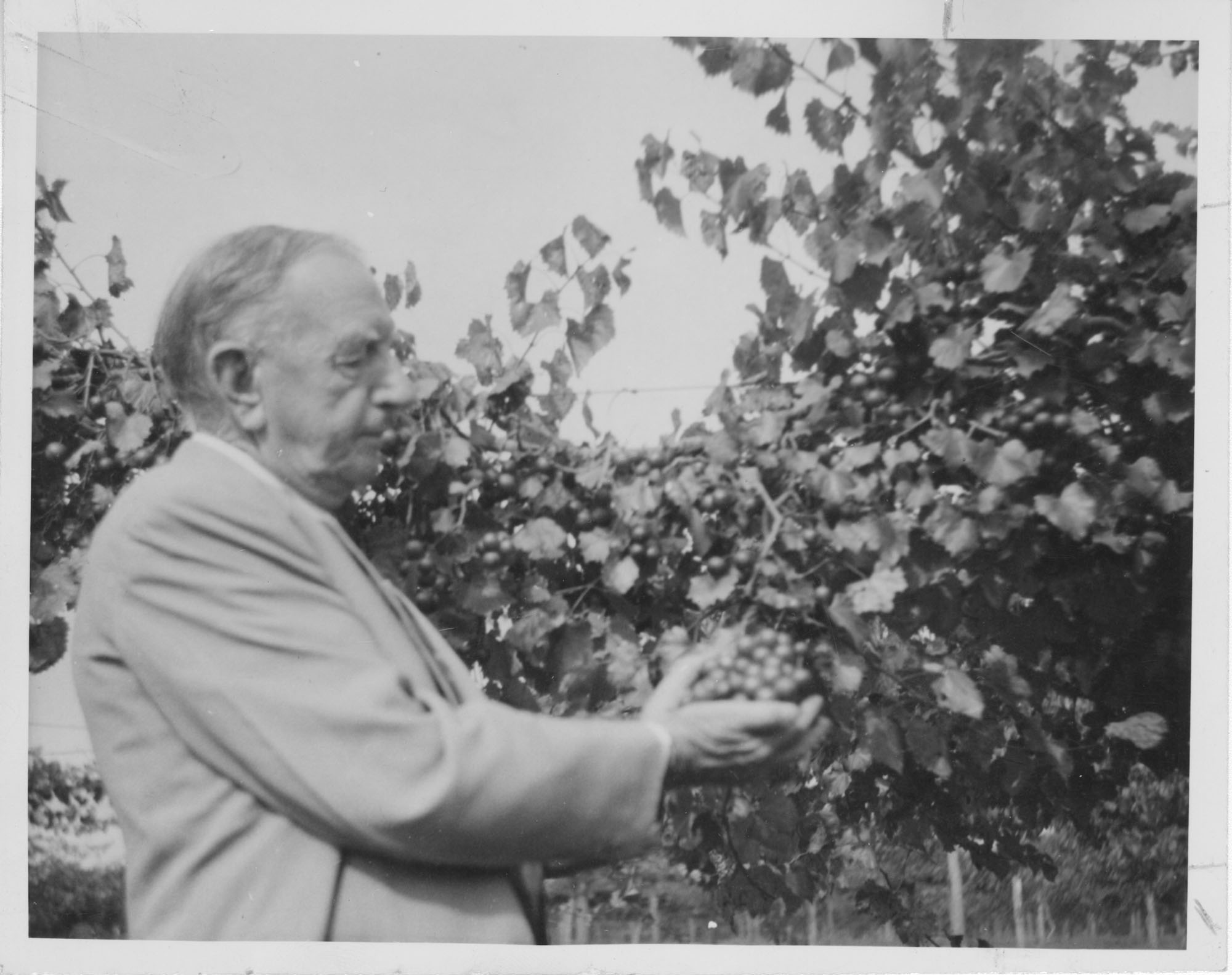 Man Holding Grapes