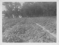 Crop Field Behind a House