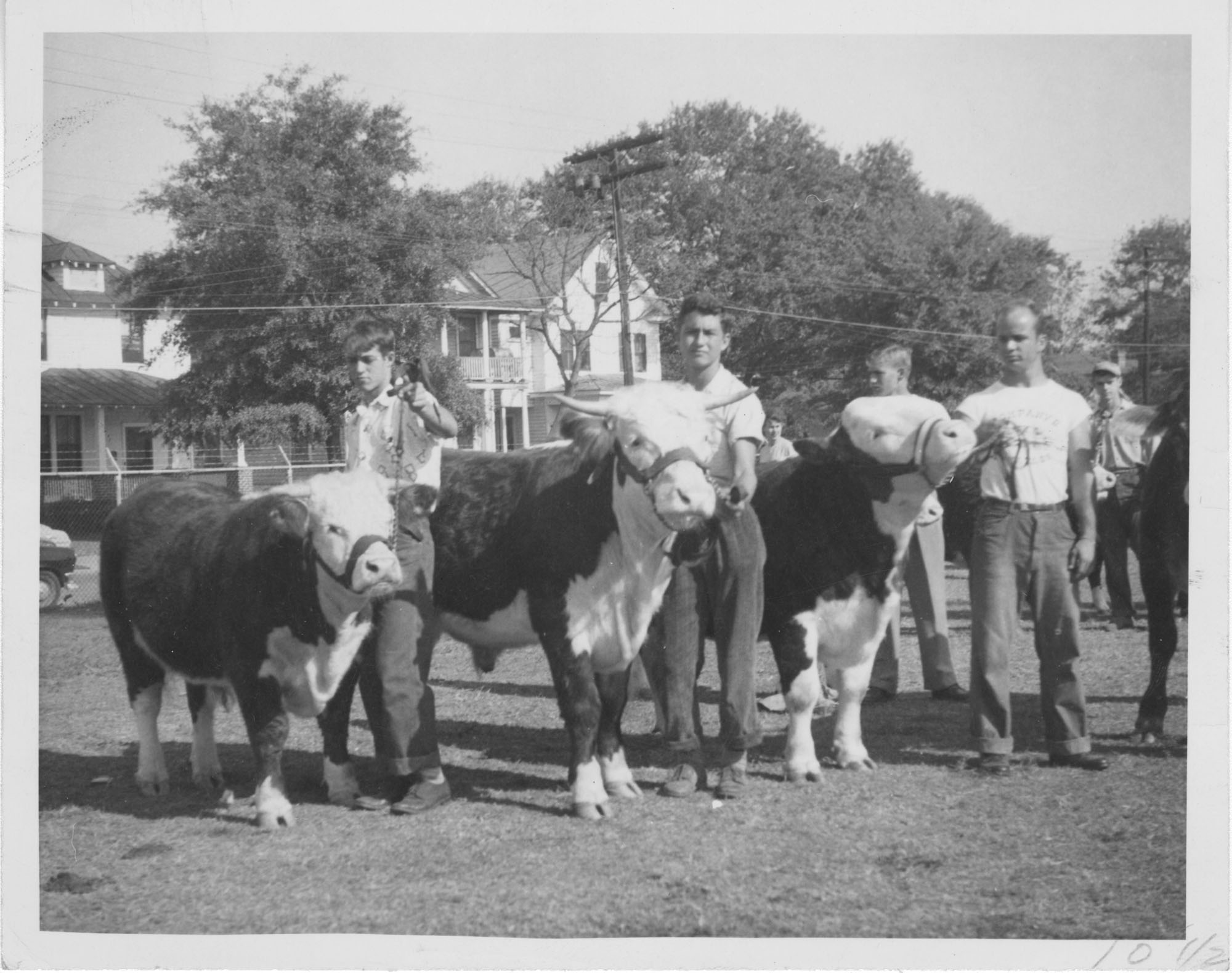 Men with Cows