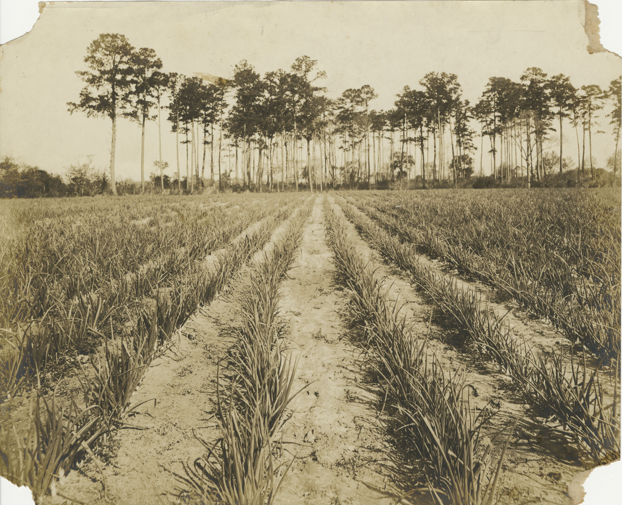 Planted Field