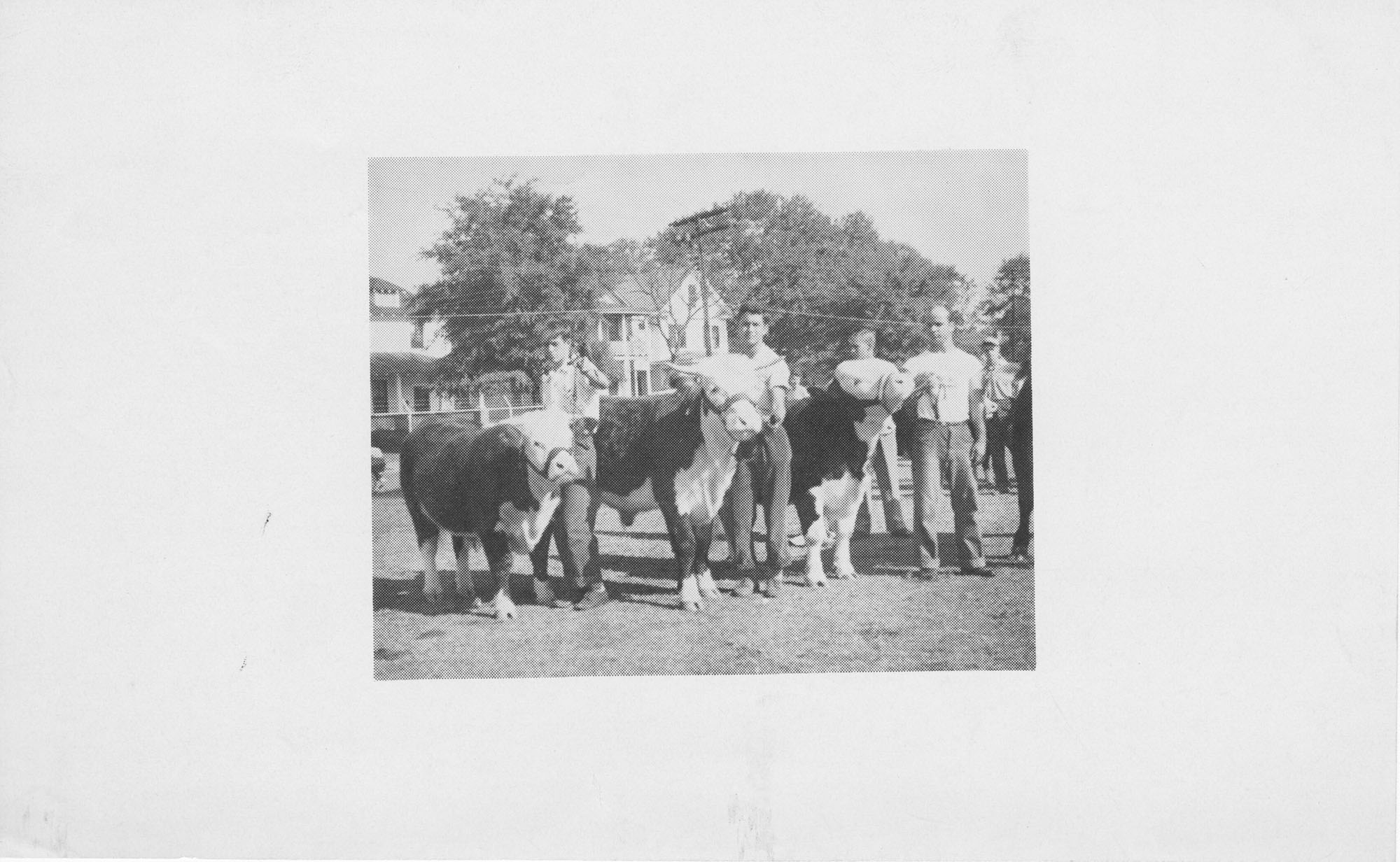 Print of a Men with Cows