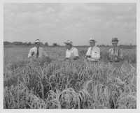 Men in Grain Field
