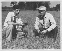 Two Men Examining Grasses in Field