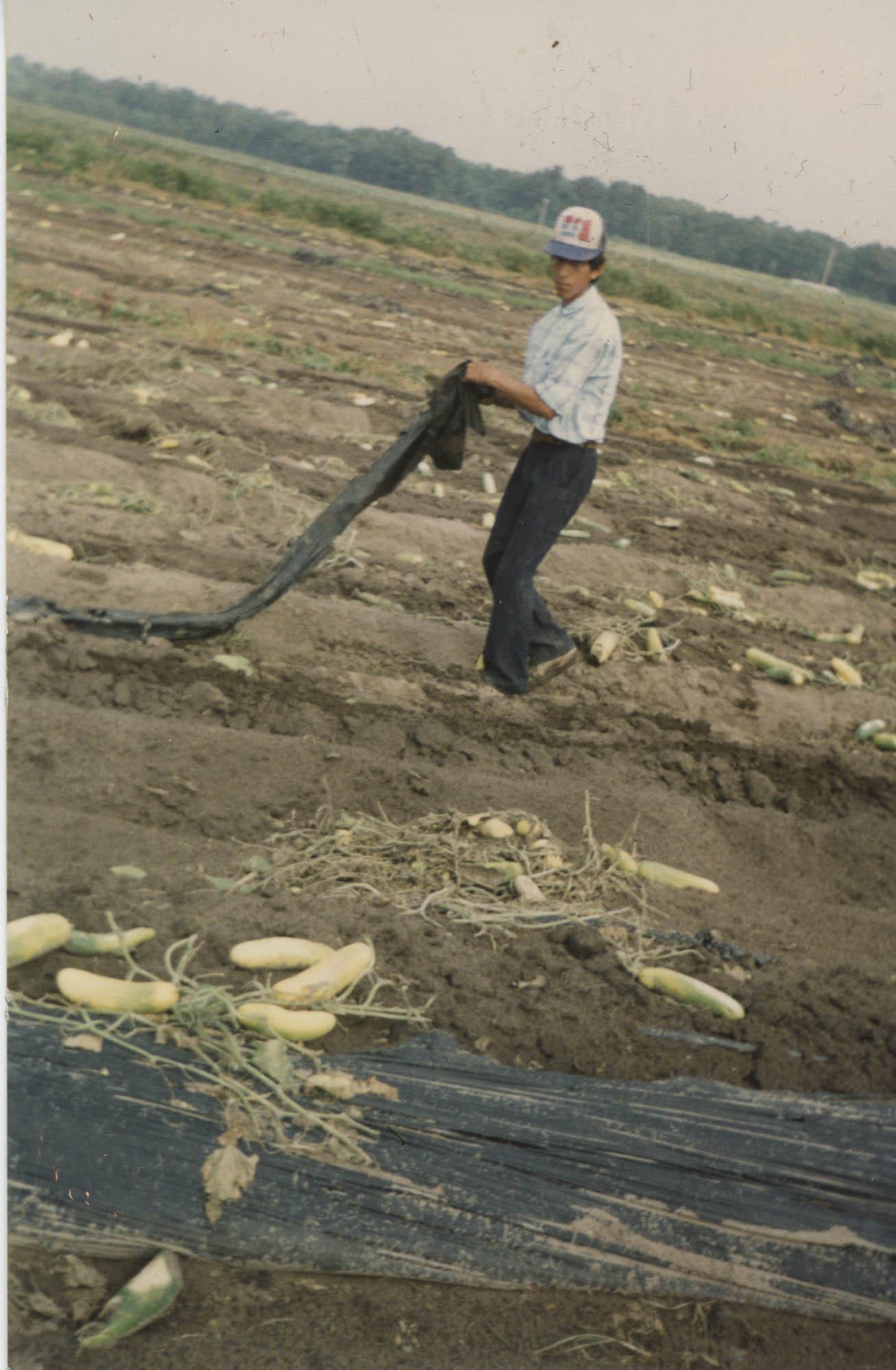 Fotografía de un trabajador agrícola  /  Photograph of Agricultural Worker