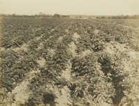 Field on Daniel Island