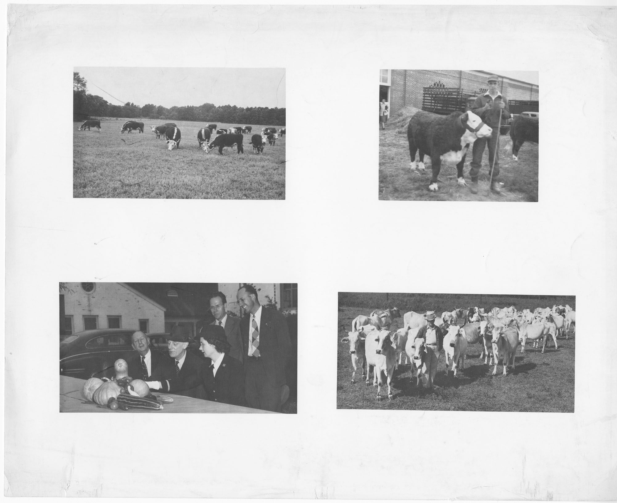 Print of Various Agricultural Photographs