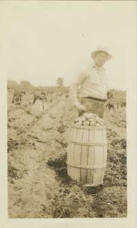 Man Next To a Barrel of Potatoes