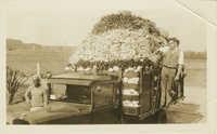 Truckload of Market Vegetables