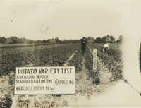 Potato Inspection in Field