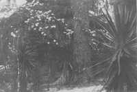 Tea Plantation Flora