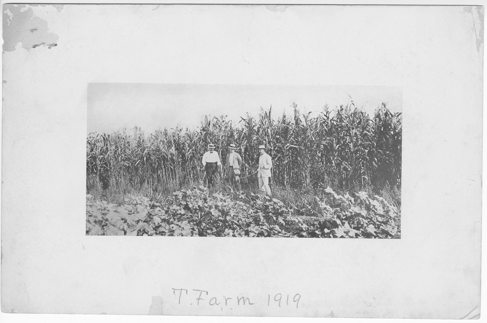 Prints of a Photograph Taken at an Old Rice Field at T. Farm