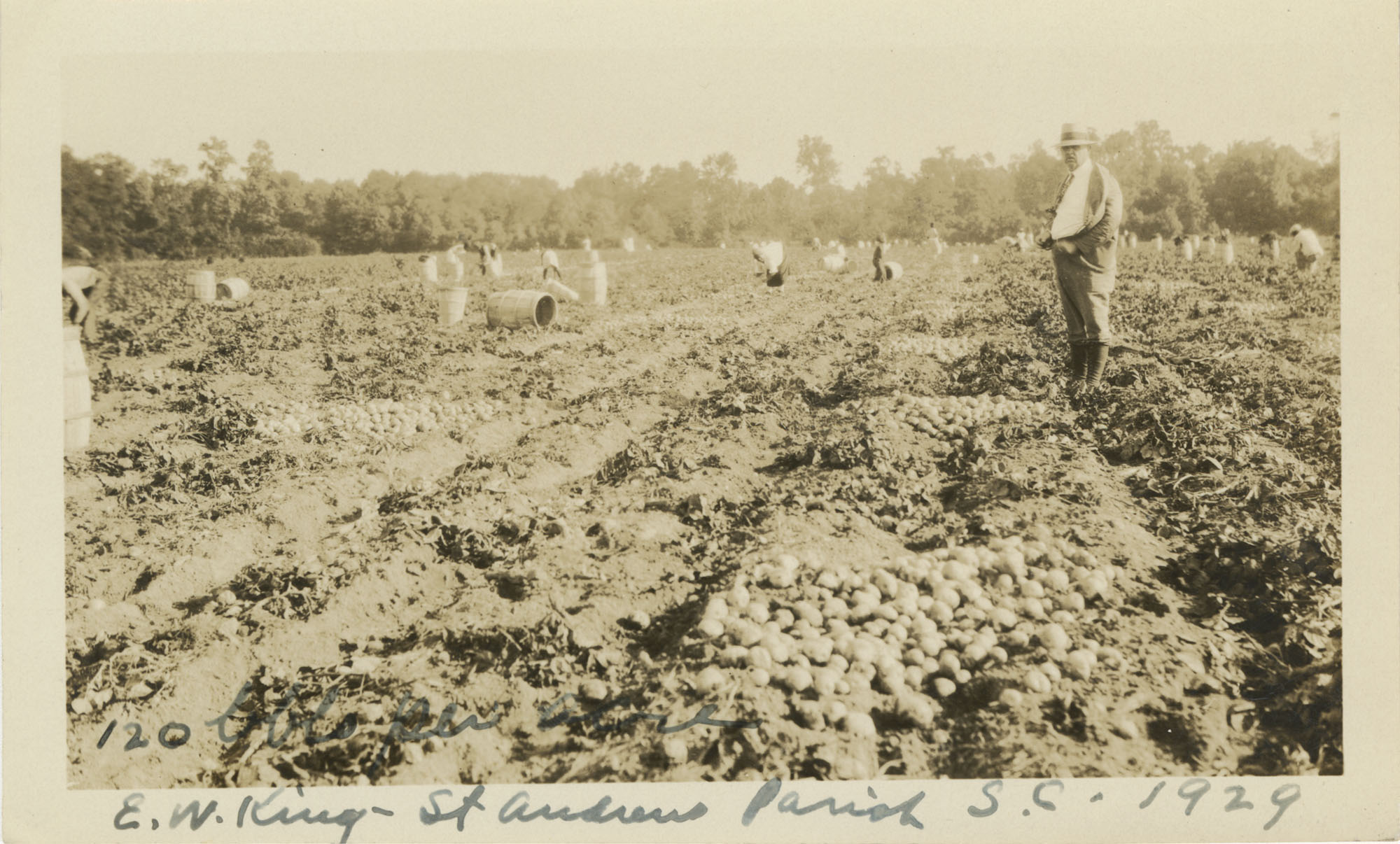 Potato Harvesting