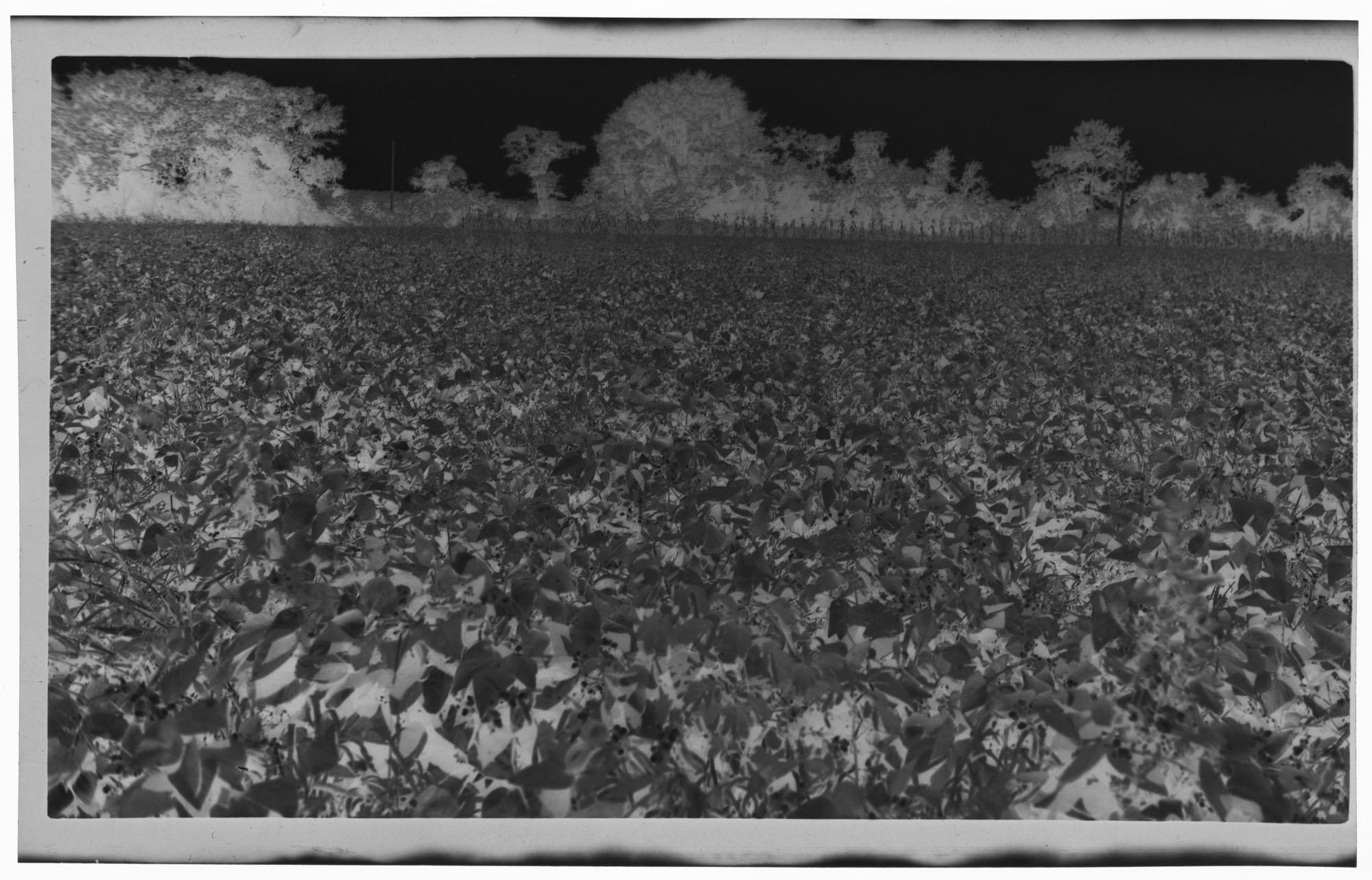 Negative of an Unknown Field