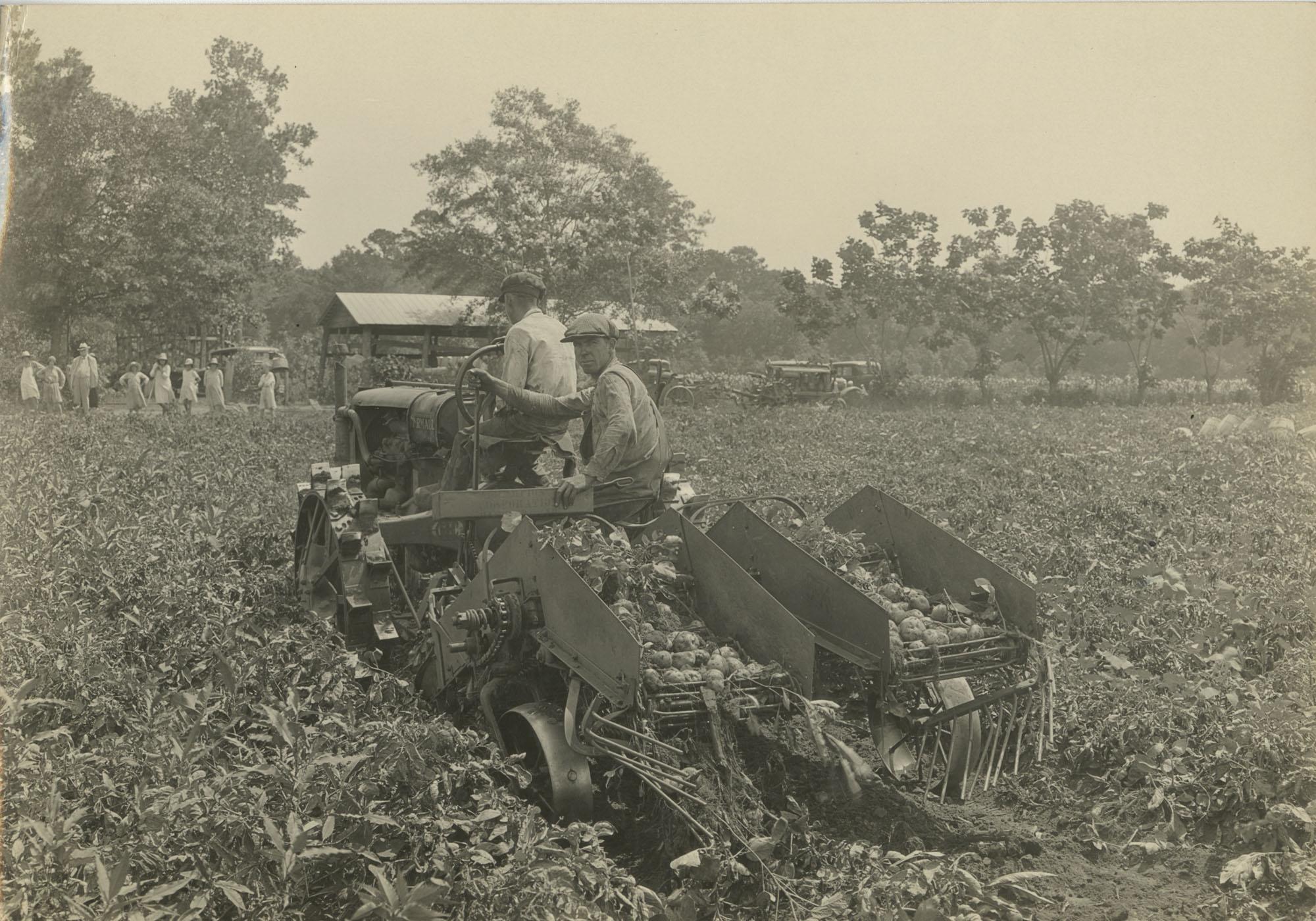 Men Harvesting Potatoes on Machinery