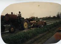 Fotografía de trabajadores agrícolas plantando tomates  /  Photograph of Agricultural Workers Planting Tomatoes