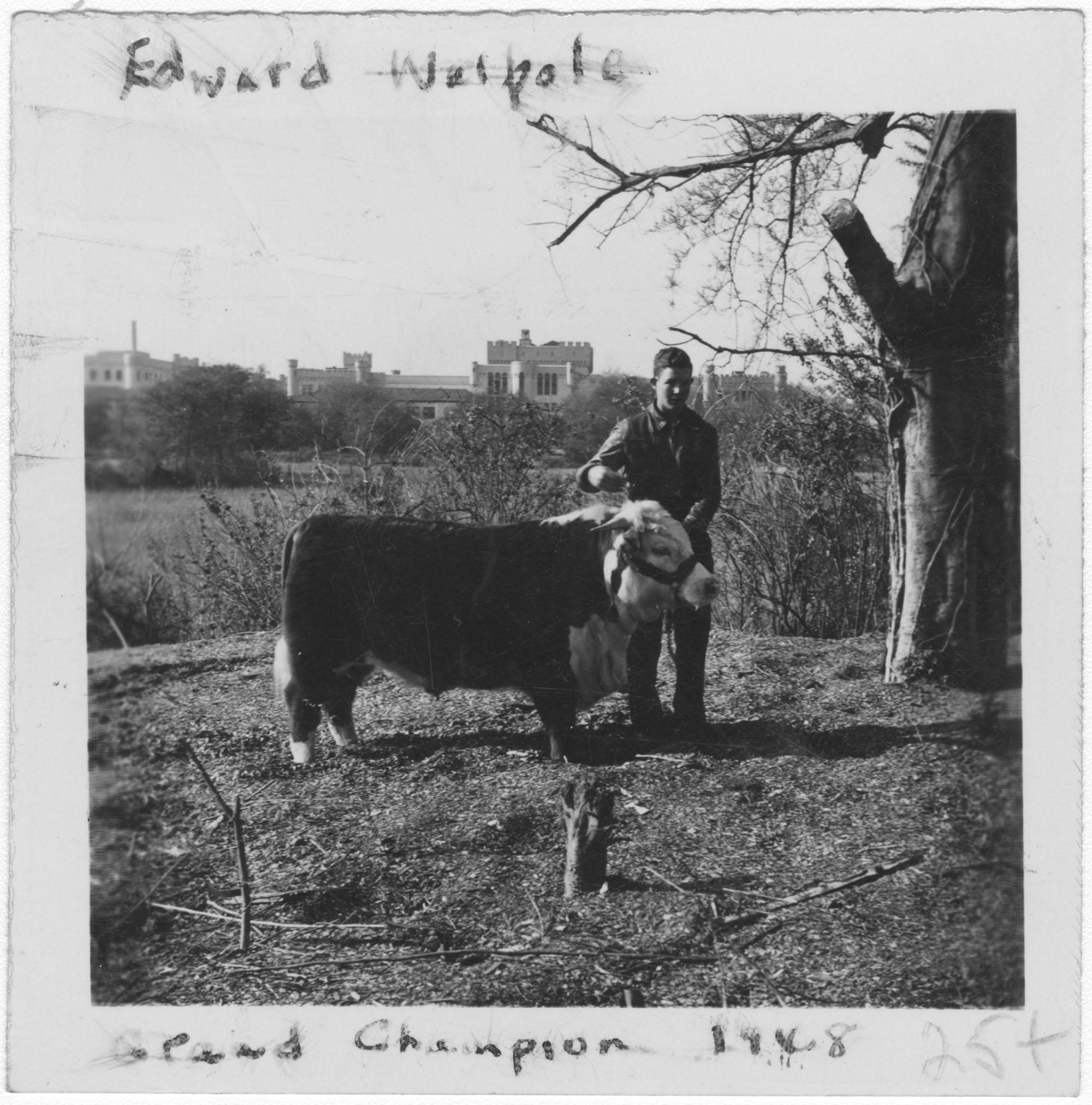 Edward Walpole with Champion Bull