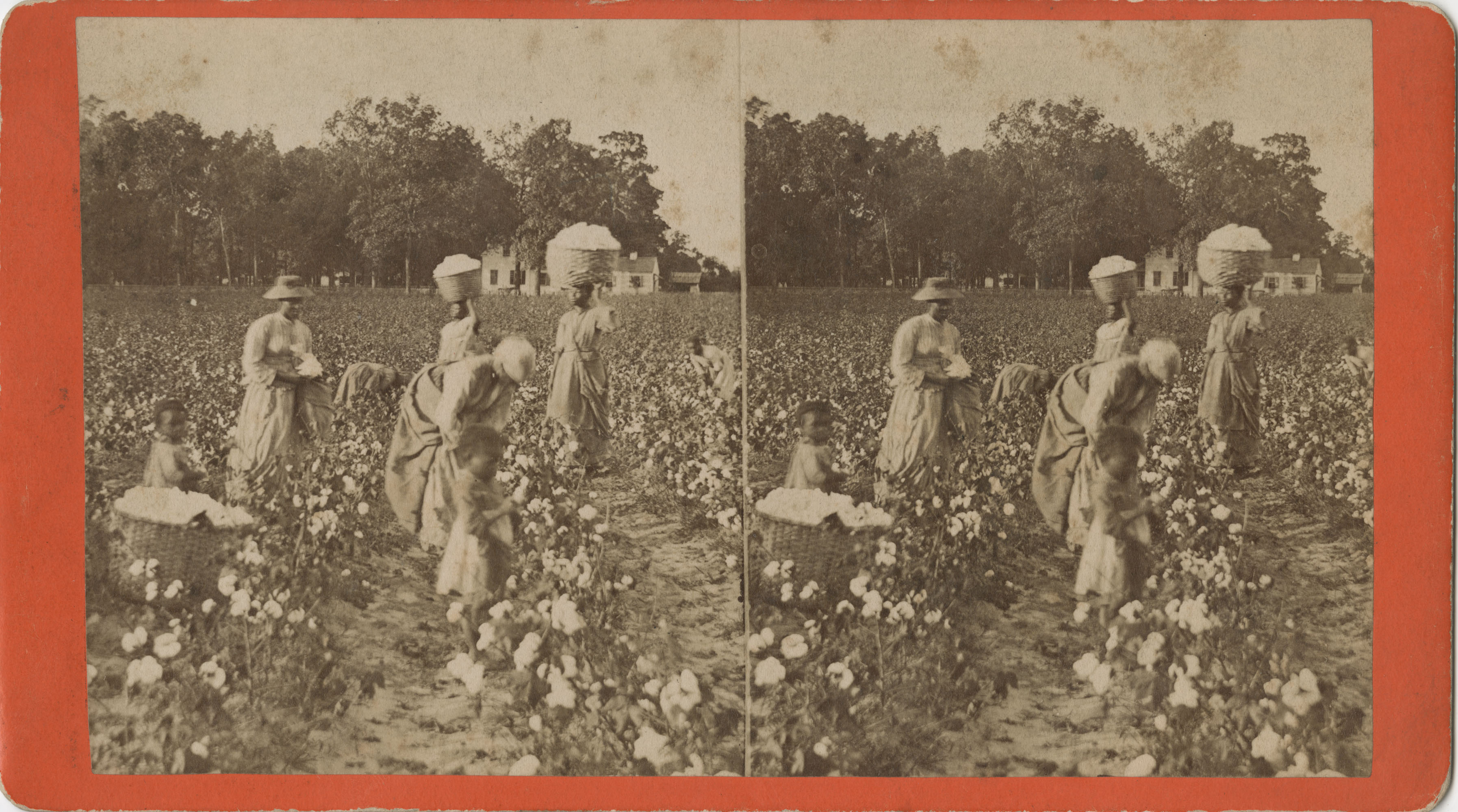 Stereo Card Depicting Women and Children Working in a Cotton Field