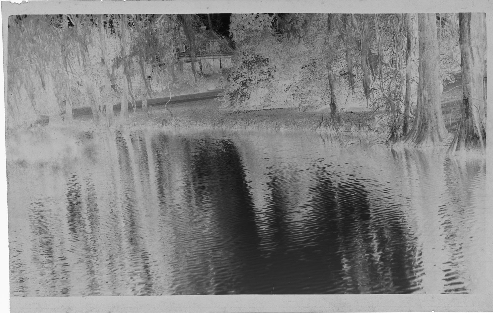 Negative of House on Magnolia Plantation