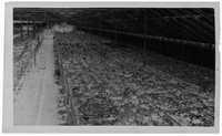 Negative of Magnolia Plantation Greenhouse